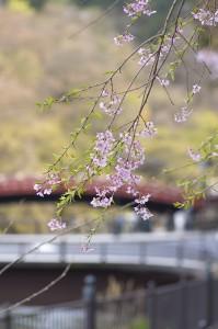 photo0000-4679