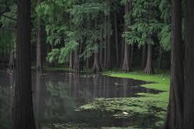カナダの森